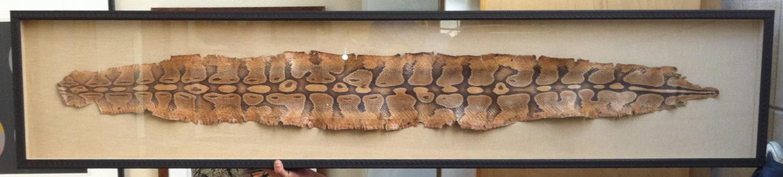 Snake in the frame